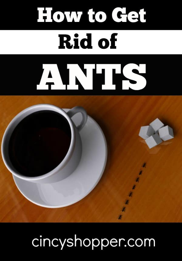 How to Get Rid of Ants CincyShopper
